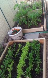 garden for blog